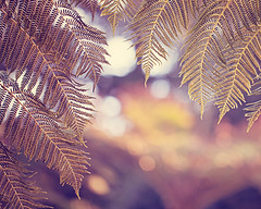 Hello Sunshine (Melanie Alexandra Photography) Tags: sanfrancisco goldengatepark macro nature springtime naturephotography