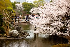IMG_4867 (Thomo13) Tags: park flowers japan canon cherry eos tokyo spring shinjuku blossom mark ii 桜 sakura 5d 新宿御苑 gyoen hanami 2013 櫻さくら gettyimagesjapan13q1