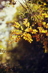 Bright and Yellow (Flick Vlooi ~ (inactive for most, layout too slow)) Tags: autumn light sunlight fall nature leaves yellow gold shadows dof seasons bright pentax bokeh vivid aglow k5 fa31 dreamphoto