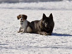 Trulte is.. (Vidar Ringstad,Skedsmo) Tags: winter shadow portrait dog sun white snow black cold sol dogs nature look sunshine norway canon eos se norge frozen vinter google europa europe flickr frost sitting natur norwegen images hund 7d ser scandinavia lay sn ligger lillestrm sitter portrett hunder vidar svart solskinn laydown skygge redbrown skandinavia kaldt hvit ligge naturepic frossen naturbilde ringstad nebben rdbrun nebbursvollen mygearandme rememberthatmomentlevel1 rememberthatmomentlevel2 badeveien