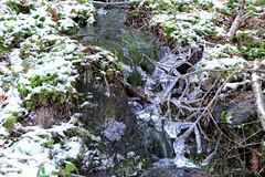 Perles dans le ruisseau (Qusoygascoun) Tags: france tourism nature promenade neige paysage sentier fort vosges insolite verdure glace tourisme mousse randonne sousbois spectaculaire cleurie