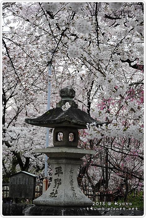平野神社 (2).jpg