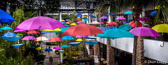 Floating Parasols (Dion Cragg) Tags: color colour umbrella thailand bangkok parasol umbrellas parasols brolley