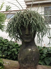 IMG_0438 (High commander 52) Tags: camera summer tree halloween up garden close head 4 using pot planter ipad