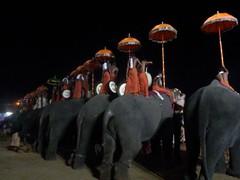 koodalmanikyam utsavam 2013 shiveli25 (koodalmanikyam-utsavam) Tags: elephant utsavam irinjalakuda koodalmanikyam irinjalakudautsavam shiveli koodalmanikyamtemple koodalmanikyamutsavam2013 koodalmanikyamutsavamphotos