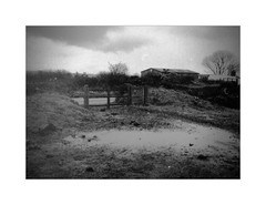 Wasteland [Pen EE] (Mr B's Photography) Tags: blackandwhite bw tree film 35mm puddle gate olympus halfframe penee