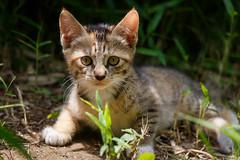 A Kitty in the Bush
