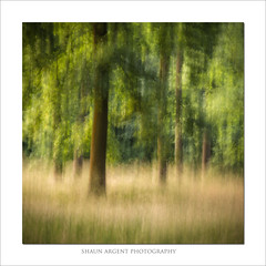 Glade (shaun.argent) Tags: woodland woods trees tree texture nature shaunargent seasons summer icm grasses glade landscapes leaves morning