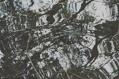 D (elleiriem) Tags: nature natura dettagli cose casuale tartaruga tortoise lago lake torino turin acqua water