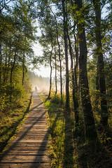 mystery forest (Rainer Schund) Tags: mystery forest nikon natur nature natureexploring naturemasterclass nebel fog light lichterfest lightrays lichtstimmung licht lichtstrahlen sunrise sonnenaufgang