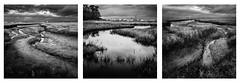 Saltmarsh on Southampton water (catkin314) Tags: bw blackandwhite wideangle saltmarsh southamptonwater hythe water marsh coast contrast triptych