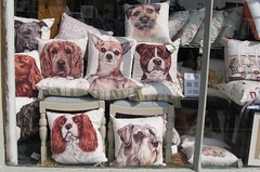 It's a Dogs Life (jcbkk1956) Tags: window shopwindow cushions dogs nikon furnishings coolpix4300 chairs furniture