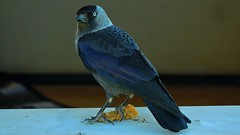 crow hunter (bilal gldoan) Tags: crow crows ku kkekmece kamera nikon nikonp600 natural nature nikoncoolpixp600 nice brid bright brilliant karga av hunter animal animals autdoor hayvan siyah black blackandwhite white