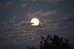 Moonlight (Vasquezz) Tags: mond moon nacht night mondaufgang moonrise mondlicht moonlight
