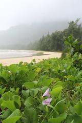 Ahupua'a O Kahana State Park (LouAdam) Tags: oahu windwardcoast