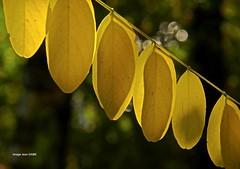 alignements et backlight au lever du soleil (jean_game) Tags: exterieur nature macro vegetalmonochrome alignements automne backlight