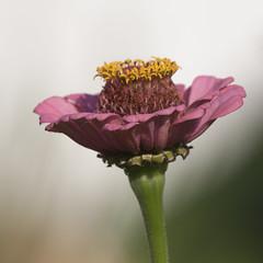 Pleinement ouverte et offerte  la lumire (mrieffly) Tags: fleurs findt canoneos50d 100400issriel