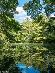 """Mirror Lake"" at Ise Shrine, Japan (patuffel) Tags: ise shrine japan iseshima shima g7 jingu grand geku lake mirror tree forrest trees green water mirrored"