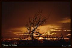 Tramonto rosso fuoco - Settembre-2016 (agostinodascoli) Tags: tramonto albero landscape sunset cianciana sicilia nikon nikkor nature sole agostinodascoli paesaggi settembre