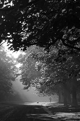 walkin' the dogs (Towner Images) Tags: dog dogs park walk walking walkies stroll exercise air tree canopy mono monotone monochrome monochromatic liverpool merseyside morning am bw blackandwhite whiteandblack greyscale walker towner