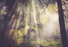 Sun flares in the forest - artistic (Thomas Alexander Nagy) Tags: branch branches creepy dusk enjoyment enlightened enlightenment evening field flare fog forest freedom fresh grass haze hidden illuminated leafs leaves light lonely meadow mist mysterious mystic nature outdoors penetrate rays secret shine smoke spring summer summertime sun sunbeams sunlight sunset sunshine tree wallpaper woods