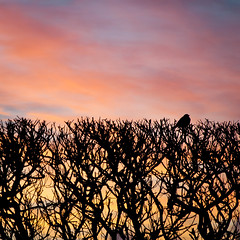 A tresure moment (Kristin Sig) Tags: morning trees winter bird sunrise moment tresure