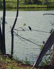 (Shawnee Ispala) Tags: rio passarinho arvore galhos galho bentivi