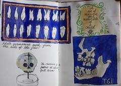 Drawing London on Location@Hunterian Museum (noriko.stardust) Tags: london art museum tooth painting notebook skull artist drawing teeth diary journal blogger location artists anatomy watercolour draw hunterian journalling notebookism