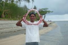 Hula 15 Feb 2013 (212) (KLM Round The World) Tags: hula scubadiving papuanewguinea papouasienouvelleguinee plongeesousmarine