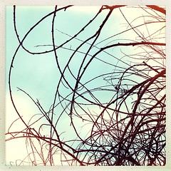 """Concentric tangle. #tree #abstraction #calligraphic • <a style=""""font-size:0.8em;"""" href=""""https://www.flickr.com/photos/61640076@N04/8486533793/"""" target=""""_blank"""">View on Flickr</a>"""