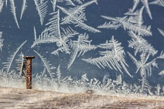 Feathered frost - explored :) (s@ssyl@ssy) Tags: