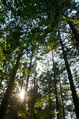 Ober-Olmer Wald (DianaWitt) Tags: tree forest germany deutschland europa natureza natur bosque wald mainz alemanha europ lerchenberg