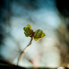 The Lady in Green (Brînzei) Tags: flowers green spring lomo bokeh cosina squareformat m42 vignette manualfocus ★ explored bucurești canoneos400d crângași vivitar28mmf28mcwideangle