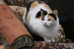 Gatito (marathoniano) Tags: naturaleza art nature animal rural cat village arte pueblo natura gato felino gat albacete castillalamancha poble ayna marathoniano ramónsobrinotorrens