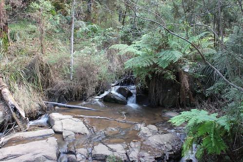 Fern tree gully