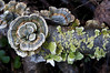"TurkeyTail (Trametes versicolor) • <a style=""font-size:0.8em;"" href=""http://www.flickr.com/photos/92887964@N02/8555608125/"" target=""_blank"">View on Flickr</a>"