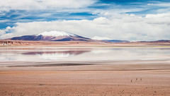 (Xvant) Tags: chile cloud reflection animal horizontal clouds canon sand desert cielo nubes reflejo desierto 1855mm polarizer 169 corriendo runing sanpedrodeatacama 18mm 500d vicuas polarizador xvant lightroom4 andesplateau