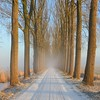 Nevel (Luuk de Vries) Tags: morning winter mist fish snow cold tree fog landscape sneeuw nederland thenetherlands wageningen binnenveld ochtend laan koud mygearandme mygearandmepremium mygearandmebronze mygearandmesilver blinkagain photographyforrecreationeliteclub rememberthatmomentlevel1 rememberthatmomentlevel2 celebritiesofphotographyforrecreation besteverexcellencegallery photographyforrecreationclassic celebritiesphotographyforrecreation