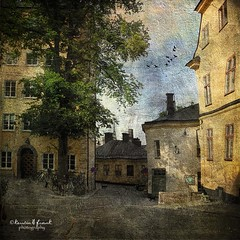 .. where the cats live .. (Kerstin Frank art) Tags: street windows cats tree texture birds photoshop buildings bikes oldbuildings roofs magicunicornverybest distressedjewelltexture kerstinfrankart kerstinfranktexture