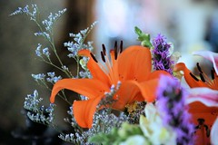Floral arrangement (howardj47) Tags: canon howardj 5dmarkiii