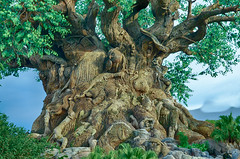 HDR : Tree of Life (Xanis_WFN) Tags: hdr treeoflife disneyanimalkingdom