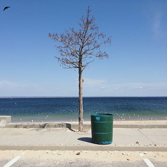 Sound (12th St David) Tags: ocean newyork tree green beach birds garbage gulls parking horizon lot can longisland northshore dustbin longislandsound locustvalley glencove lattingtown prybilbeach iphone4s technicallynottheoceanatall