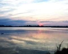 Nature's Glow (DASEye) Tags: davidadamson daseye iphone nature sunrise dawn 52in2016 52in2016challenge challenge week29