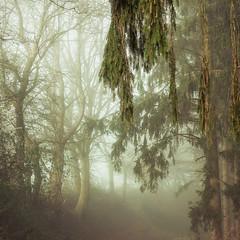 * (sedregh (on/off)) Tags: nebel fog mist eifel hilberath landschaft landscape