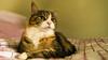 Mikko (2) (grahamrobb888) Tags: nikond800 sigma20mmf18 cat pet indoors mikko resting bed