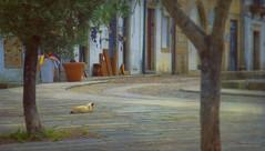 [Cats] (silviaON) Tags: street city portugal valena caminhoportugus cat textured kerstinfrankart