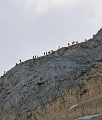 Triglav, Triglavski narodni park, Slovenija / Triglav, Triglav National Park, Slovenia (Hrvoje aek) Tags: triglavskinarodnipark triglavskinacionalnipark triglavnationalpark narodnipark nacionalnipark nationalpark priroda nature planina triglav dreikopf montetricorno malitriglav mountain planine mountains hribi stijena rock stijene rocks litica cliff litice cliffs hill planinar hiker planinari hikers planinarenje hiking julijskealpe julianalps alpigiulie alpe alps alpen alpi greben ridge planinskigreben mountainridge tominkovapot tominkovastaza tominkovput tominekroute staza put route path trail vrh summit peak panorama pejza landscape siluete silhouettes vidik pogled view ljeto summer slovenija slovenia slowenien d3300 julischealpen