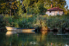 The ducks (Callegher Marco - The beauty in my eyes) Tags: duck canal basso piave brian wild wildlife nature boat pianura italy veneto colors last rays spot lights water grass canon
