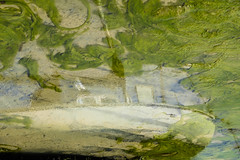 Submerged (Fourteenfoottiger) Tags: submerged boat reflection slime seaweed green harbour port water sea abstract apparition ghostly lowtide nature seaside coast coastal