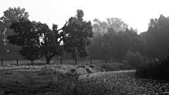 On the shore (Oczyma Duszy) Tags: parkkrajobrazowy dolinabystrzycy bystrzyca rzeka mga magia lovecraft krajobraz urbex jarnotw rosa pajczyna pajk poranek ranek wschdsca bokeh ba olympusepl5 mzuikodigital river mist fog landscape park magic fairytale dew web spider morning sunrise